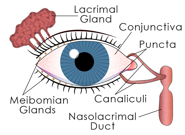 Suffering From Dry Eyes And Constant Irritation  Eye Care